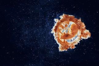 病毒如何形塑我們的世界