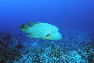 撈捕海洋保育類物種是否觸法? 填寫通報表後釋回是關鍵