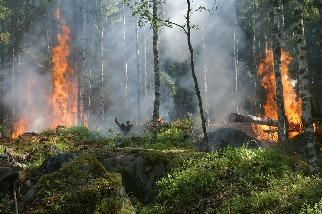 蔓延規模擴大 全球野火地域性正在改變 科學家直指氣候變遷