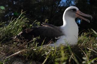 全世界已知最老的野鳥剛滿70歲──牠為什麼如此特別?
