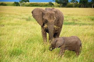 小象與媽媽