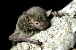 「病毒獵人」出動 研究團隊入深山取樣蝙蝠 盼避免下一波流行疫病