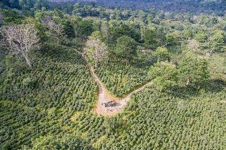 除了讓你不打瞌睡,咖啡也能幫助森林快速生長?
