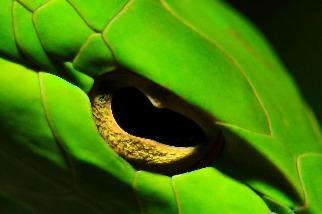 綠瘦蛇特寫