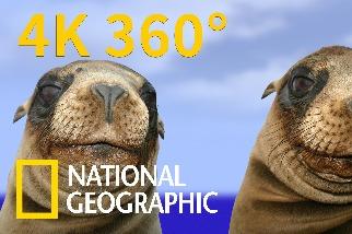 4K 360° VR:與加拉巴哥海獅面對面!