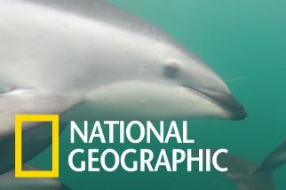 透過水底攝影體驗與海豚一起共泳的視角