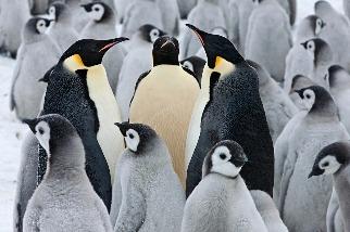 企鵝好朋友