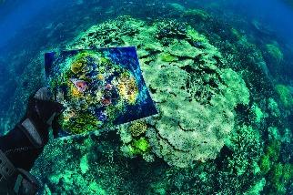 搶救脆弱的珊瑚礁