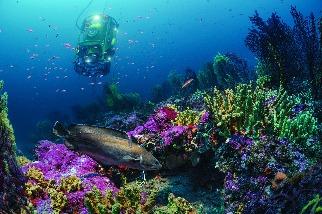 海底為家28天