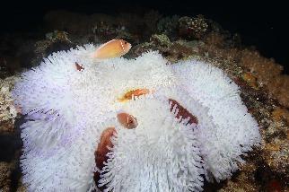 珊瑚不要跟我說再見