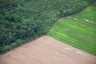 巴西亞馬遜雨林淪為排碳方 研究:10年間排碳比吸碳多20%