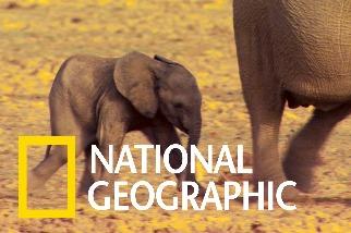大象不分國界,保育也該如此