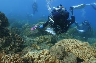 2020臺灣珊瑚礁體檢報告:海水溫度飆高加上無颱風 釀成史上最大珊瑚白化