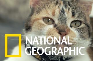 貓咪「喵喵」叫聲背後的科學