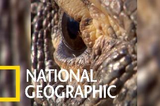 現存體型最大的蜥蜴:科莫多龍