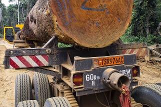 振興銀彈要三思 全球「綠色振興」報告:20國疫後資金持續傷害環境