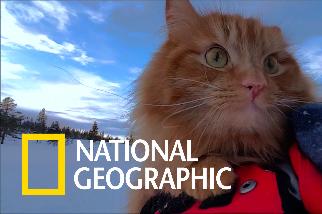 挪威的「冒險貓」最愛與主人一起享受戶外活動