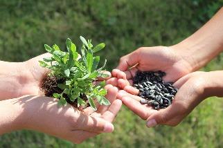 樂施會警告 全球光靠種樹減碳 需要五個印度才夠