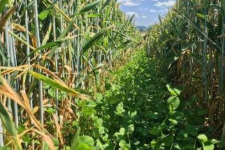英國刮起「再生農業」旋風 打造高儲碳農田地景 政府王室都支持