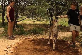 如何替獵豹採集「指紋」?