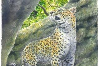 臺灣古生物研究重大發現 科學家在墾丁找到1萬2000年前花豹蹤跡