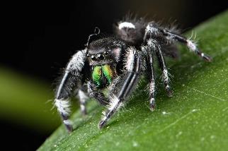 蜘蛛與其他「小野獸」尖牙利齒的祕方──重金屬