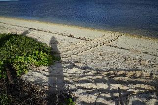 東沙島再出現海龜上岸產卵 海管處放置警示防止破壞