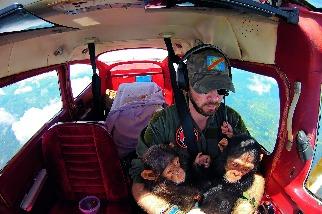 拯救黑猩猩,同時在混亂中看見希望