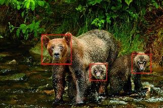 這是哪隻熊?
