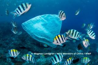 塑膠的隱藏成本 每年增18億噸溫室氣體 超過航空和船運年碳排總和