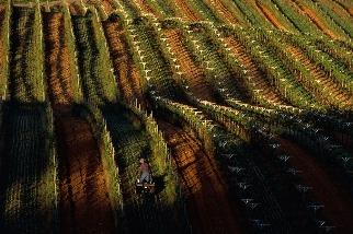 永續葡萄園