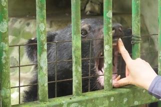 圈養黑熊與牠們的照養員──「受訓操課」用盡力氣,只為這群山林的靈魂