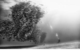 魚群大合照