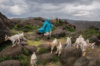 索馬利蘭:牧羊女孩