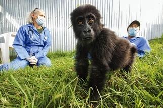大猩猩醫生