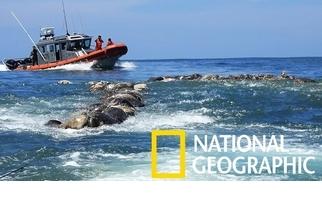 墨西哥外海驚見300隻海龜屍體