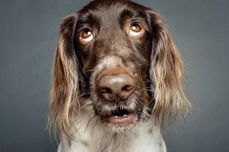 狗狗在想啥?
