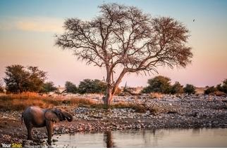 水池邊的大象