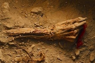 影像藝廊:千年皇家墓葬出土
