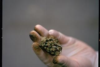 令人興奮的大麻科學