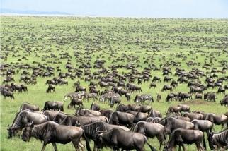 用快門追逐著肯亞的生命節奏