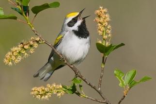 鳥兒能夠預知風暴即將來襲?