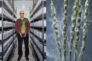 影像藝廊:下一場綠色革命