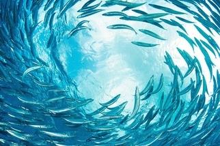 生生不息:海洋之眼
