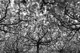 柏林:樹冠