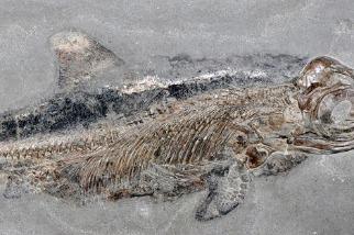 奇妙的「海怪」化石仍保有皮膚和脂肪組織