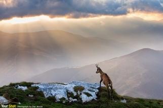 石頭山的臆羚