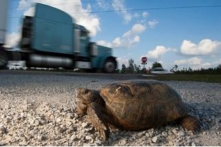 如何分辨海龜與陸龜