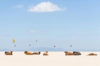 安達魯西亞:做日光浴的牛