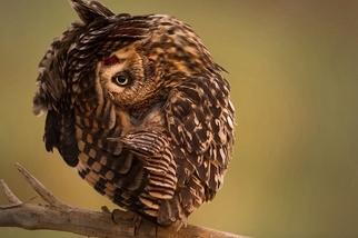 瑜珈樹式:軟Q貓頭鷹